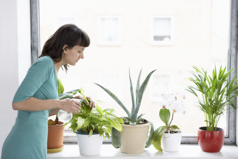 3 Houseplants for Cleaner Indoor Air